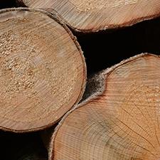 Bois wood epinettes sapin mou franc  spruce fir hardwood soft